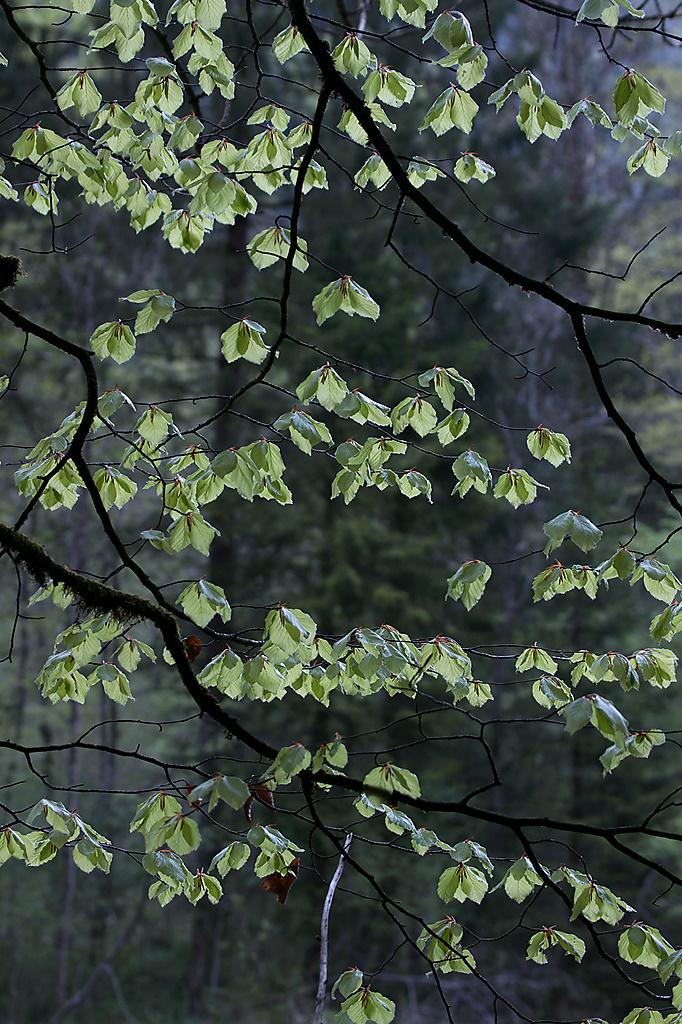 Spellbound Forest III