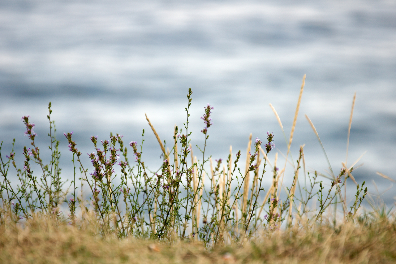 Click to enlarge: Beach Flora IIa
