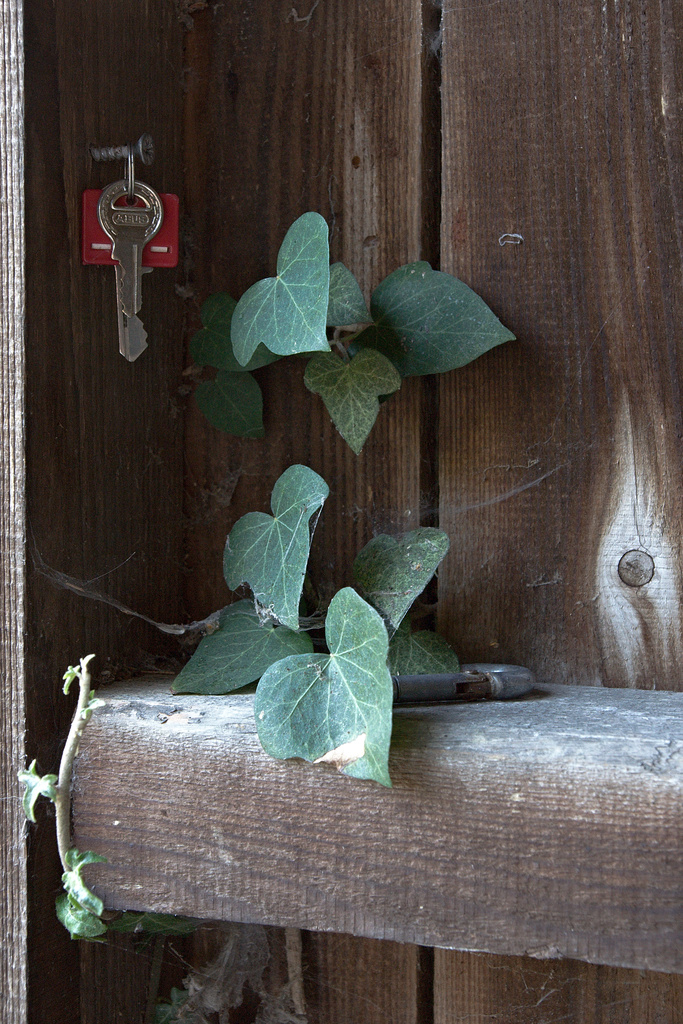 Click to enlarge: Keys and Ivy