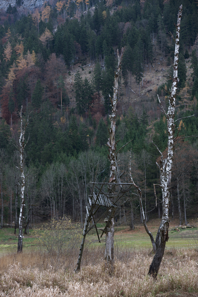 Click to enlarge: Deer Stand, Birches [f/5, 1/20 sec, 50mm-e, ISO 200, Sony A700]