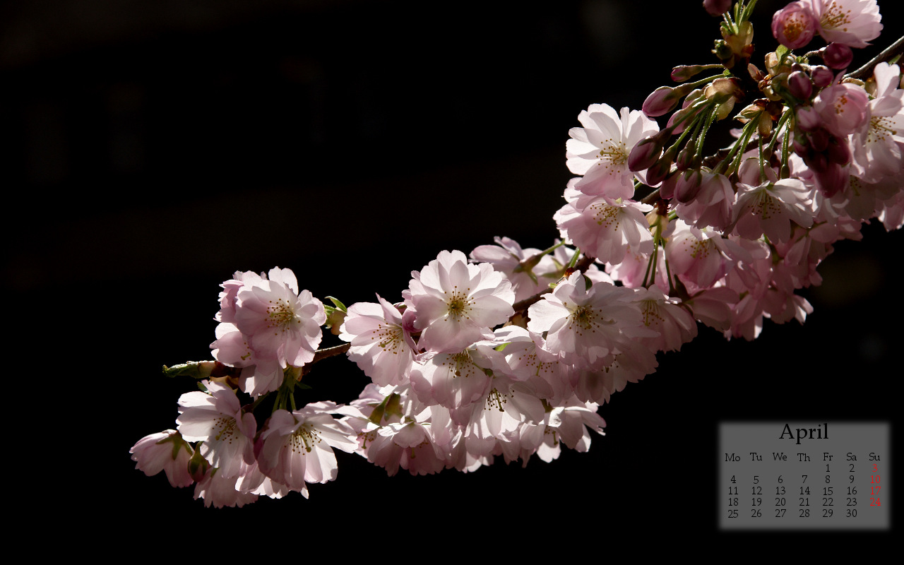Click to enlarge: spring2life_apr11_1280x800 [f/7.1, 1/1000 sec, 70mm-e, ISO 200, Sony A700]