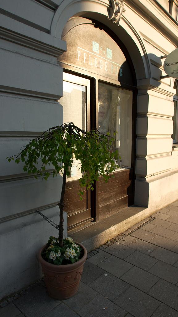 Arcs And Tree