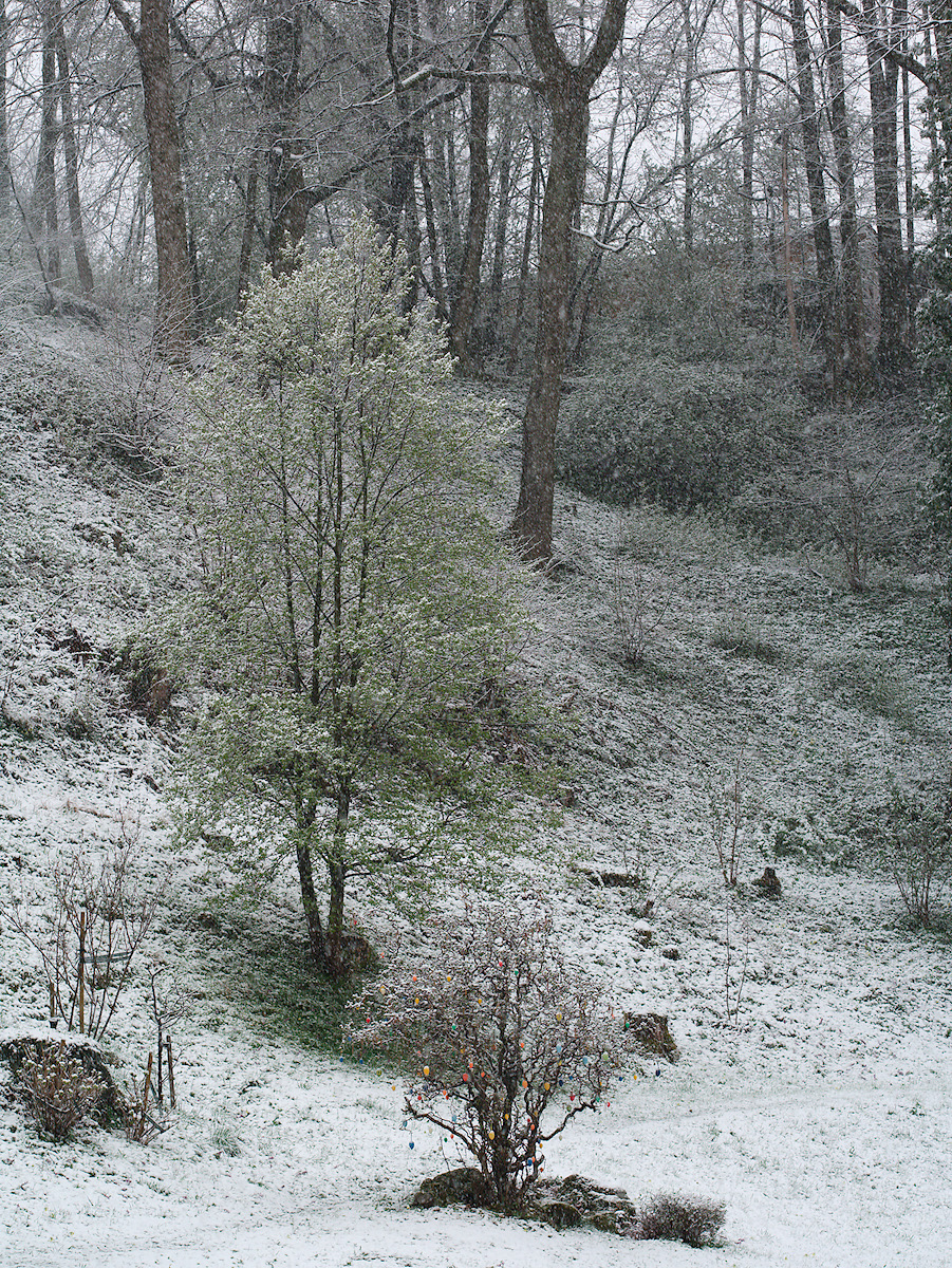 Click to enlarge: Easter Snow [f/4.5, 1/100 sec, 90mm-e, ISO 160, DMC-G3]
