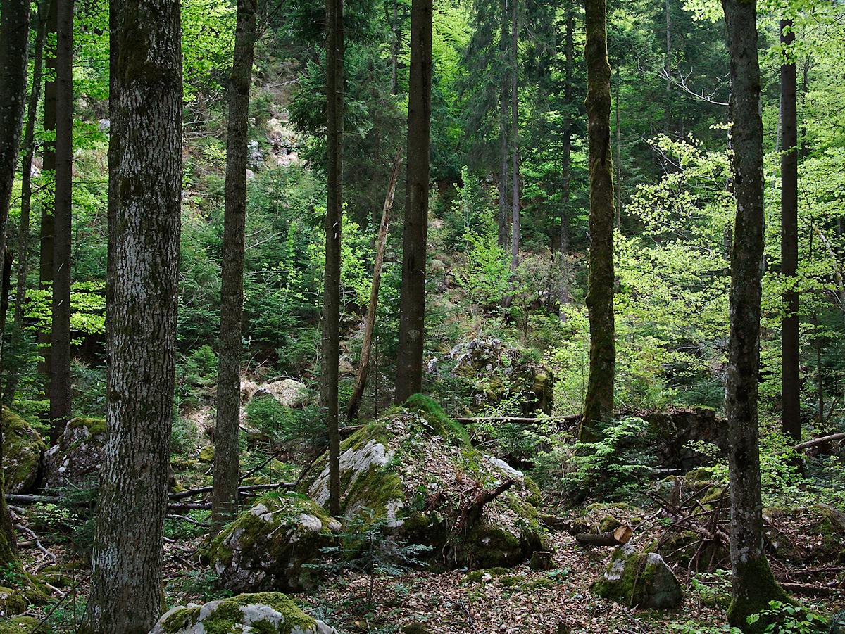 Forest On A Rockslide