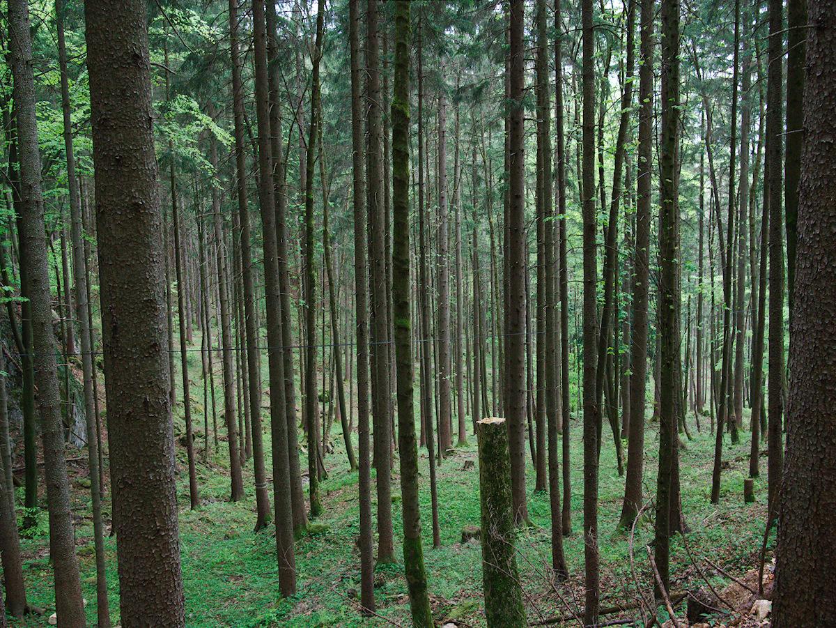 All Trees I