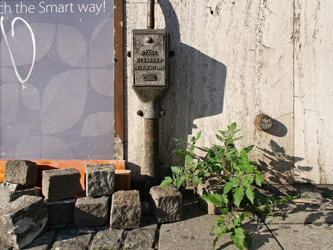 Urban Tomatoe: Blog, Urban, Weese Weeds