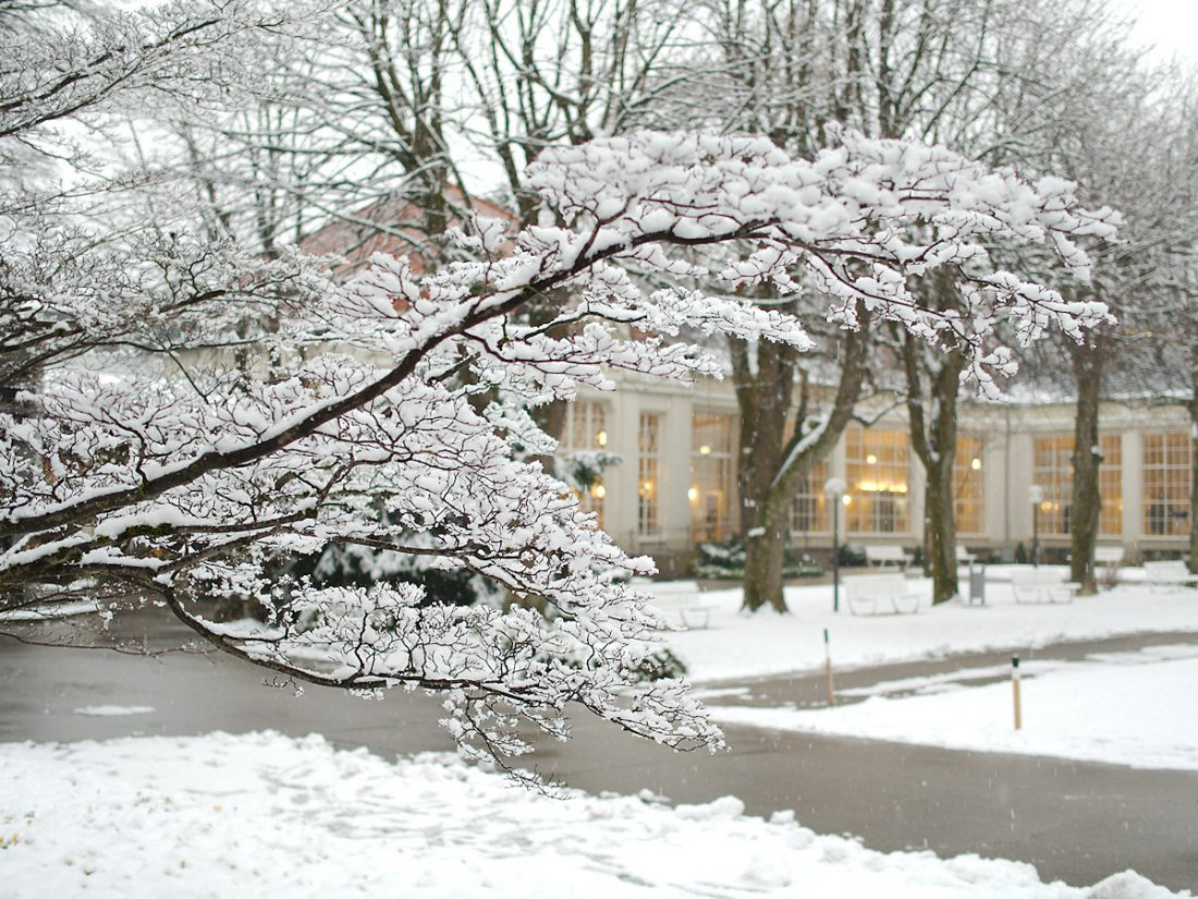 Delicate Branch: Blog, Snow, WP