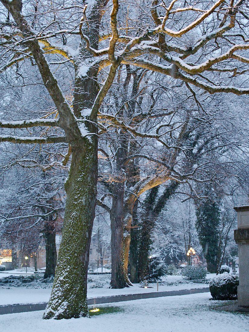 Winter Trees: Blog, Urban