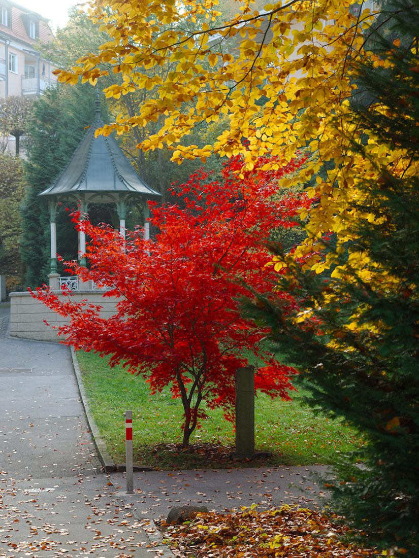 Acer Japonica: Blog, Urban, fall