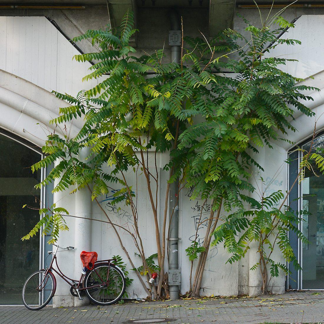 Bike and Sumach: Urban, Vernacular
