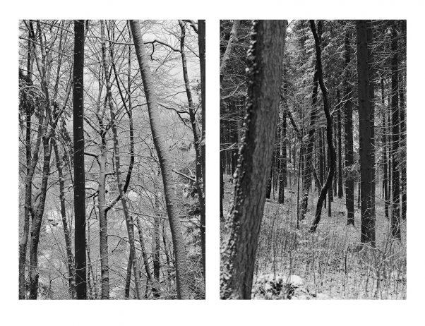 Black Trees, Kirchholz, Bad Reichenhall