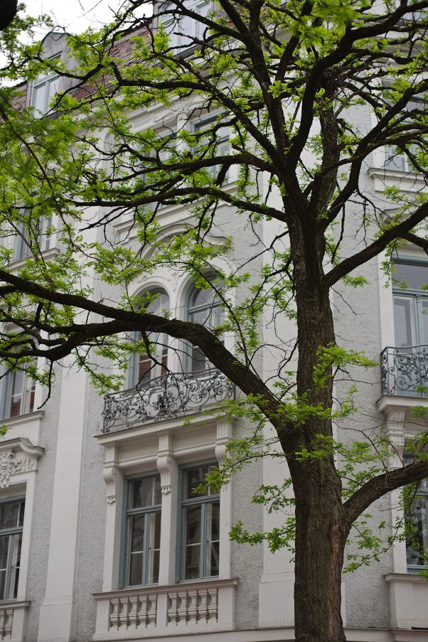 City Tree, Klenzestr., Munich, Bavaria, Germany, Minolta 1.2/58mm