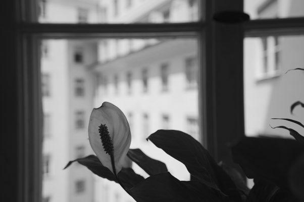 Outwards, Blumenstr., Munich, Black & White, Urban