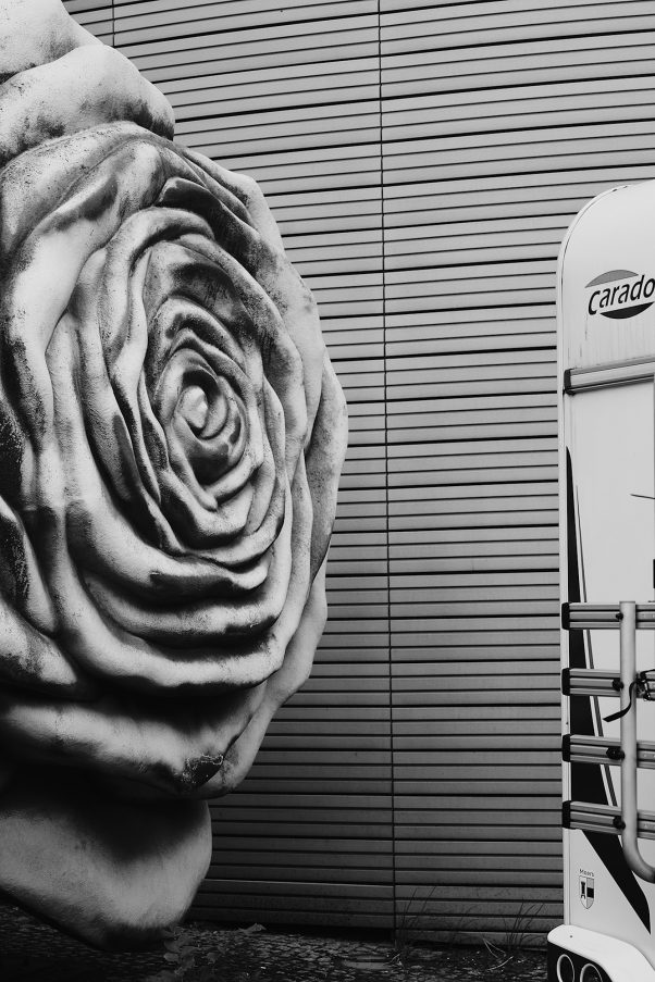 A Rose by another Name, Schöneberger Ufer 5, Berlin, geotagged, Black & White, Common Places, Urban