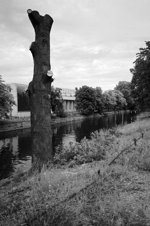 City Tree, Lützowufer, Berlin, geotagged, Black & White, City Trees, Common Places, Urban
