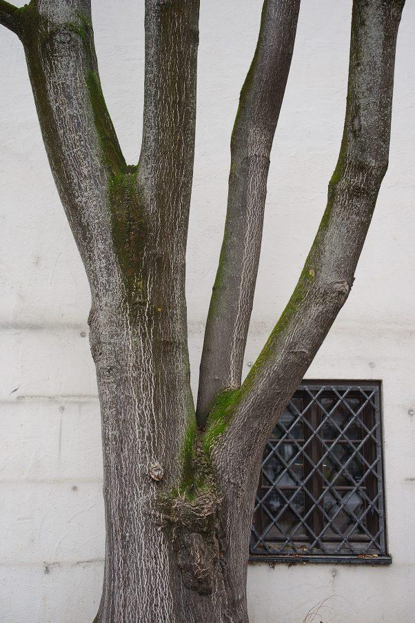 City Tree, St.-Jakobs-Platz, Munich, Coty Trees, Urban