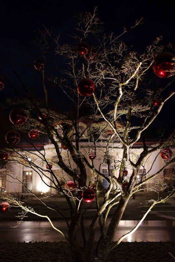 Decorated Tree and Concert Hall, Spa Gardens, Bad Reichenhall, Christmas, Night, Urban