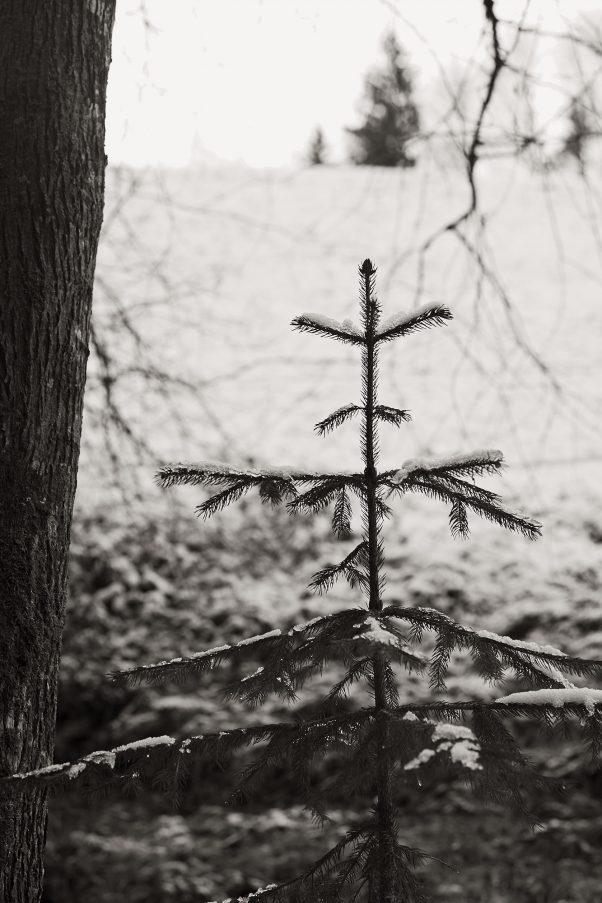 When I am grown up, I will be a Christmas Tree, Kugelbachbauernweg, Bad Reichenhall, Black & White, Minor Landscape, Treatment