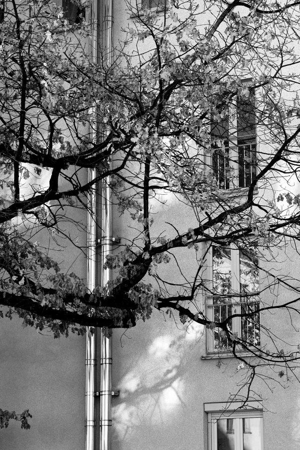 City Tree and Chimney, Haidhausen, Munich, City Trees, Minolta MD 2.5/100mm, Urban