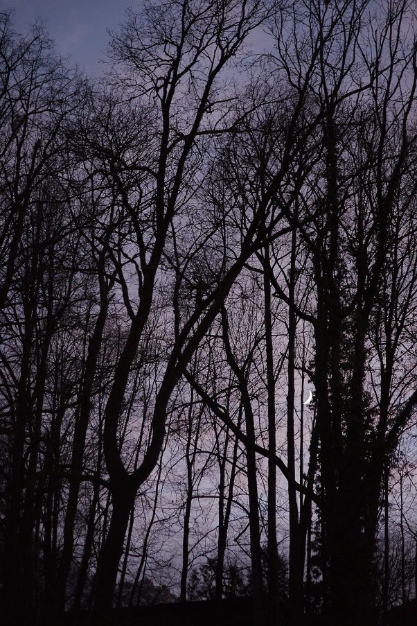 Moonlit Night, My Garden, Bad Reichenhall, Landscape, Urban