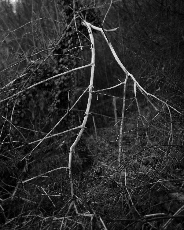 White Branch, Östl. Alte Saline, Bad Reichenhall, Black & White, Minor Landscape, Urban