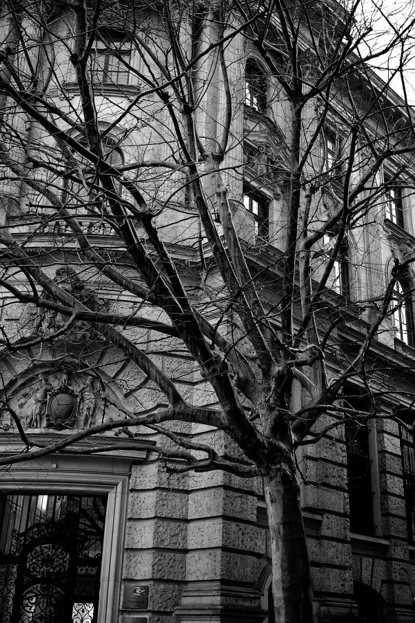 Sycamore in Rain, Lenbachplatz, Munich, Black & White, Rain, Urban
