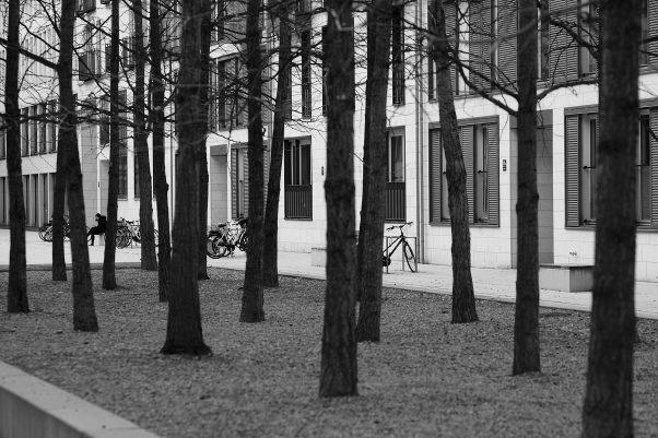 Embedded Trees, North of Stieglmaierplatz, Munich, Black & White, Urban