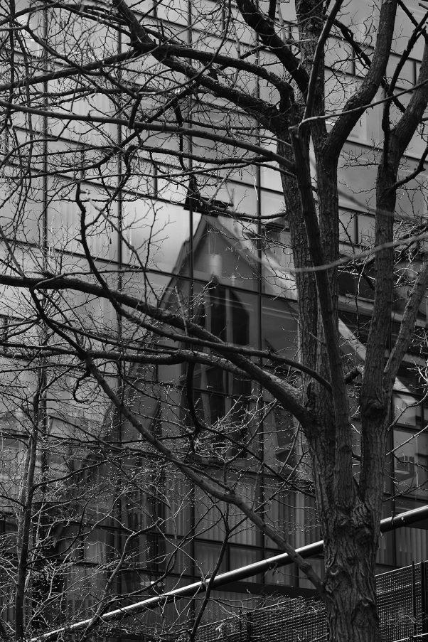 Tree and Reflection, Stieglmaierplatz, Munich, Black & White, City Trees, Reflection, Urban