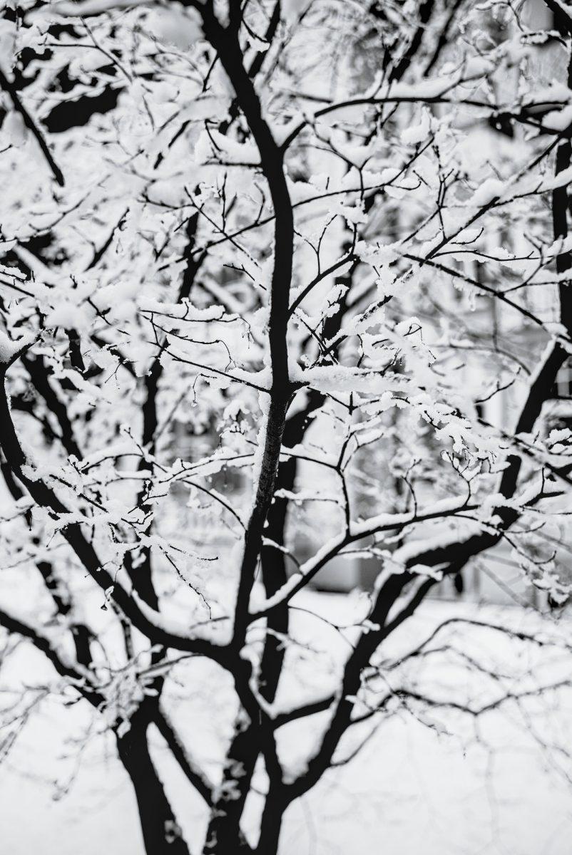 Almost_transparent_Snow.jpg