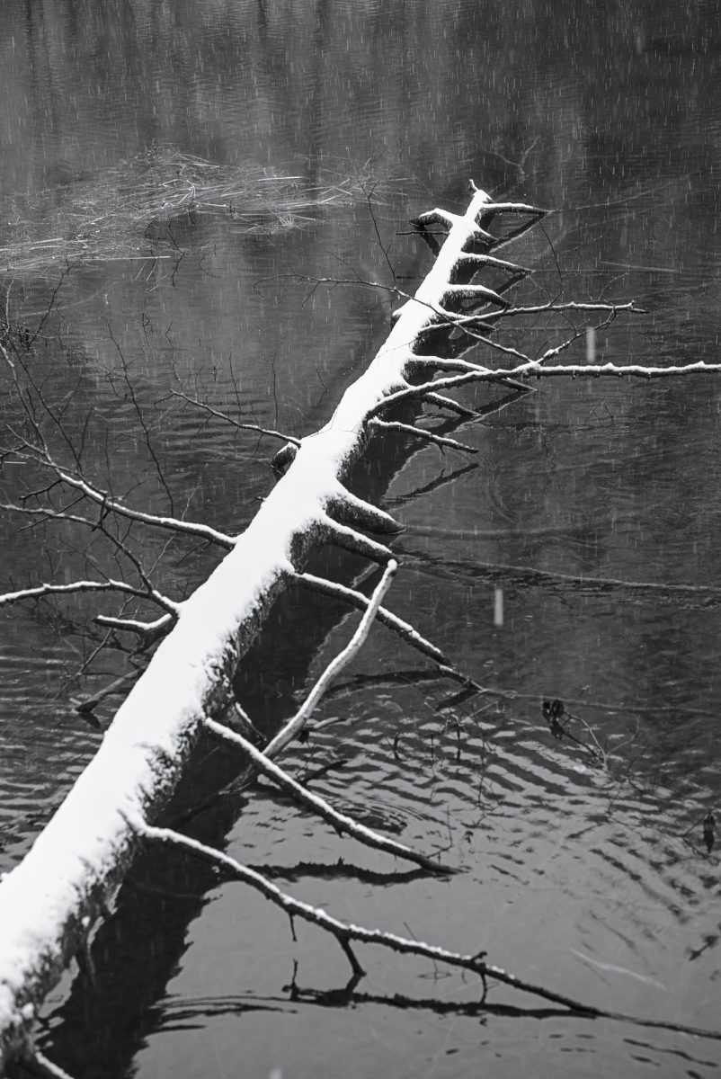 Beaver_Pier.jpg