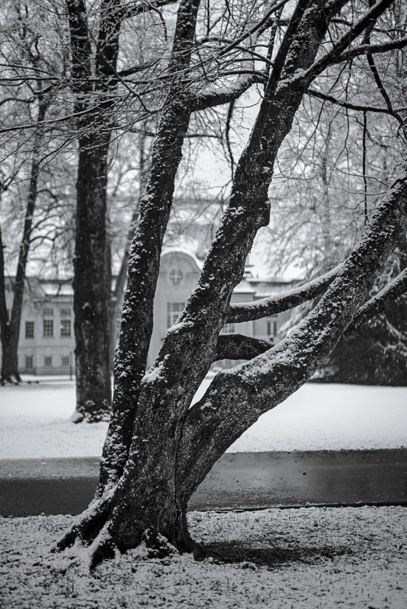 Snow_again.jpg