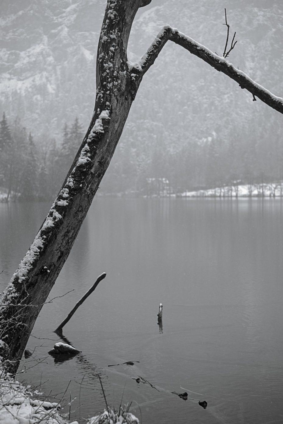 Crooked_Tree.jpg
