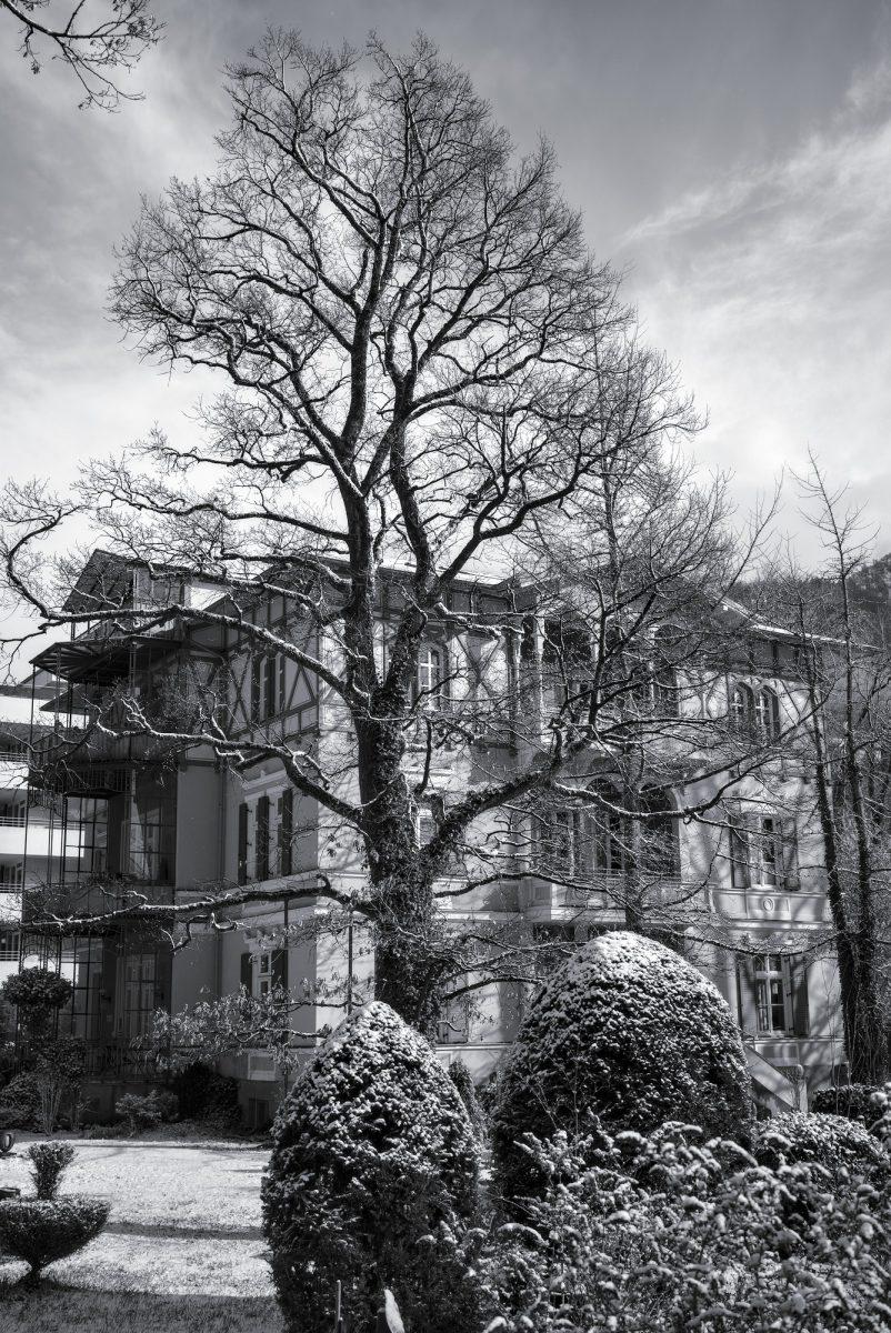 Oak_Tree_and_Villa.jpg