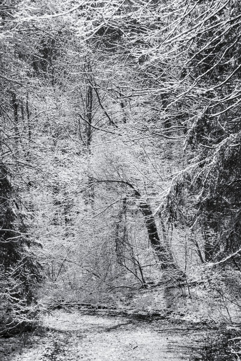 Snow-covered_Abundance.jpg