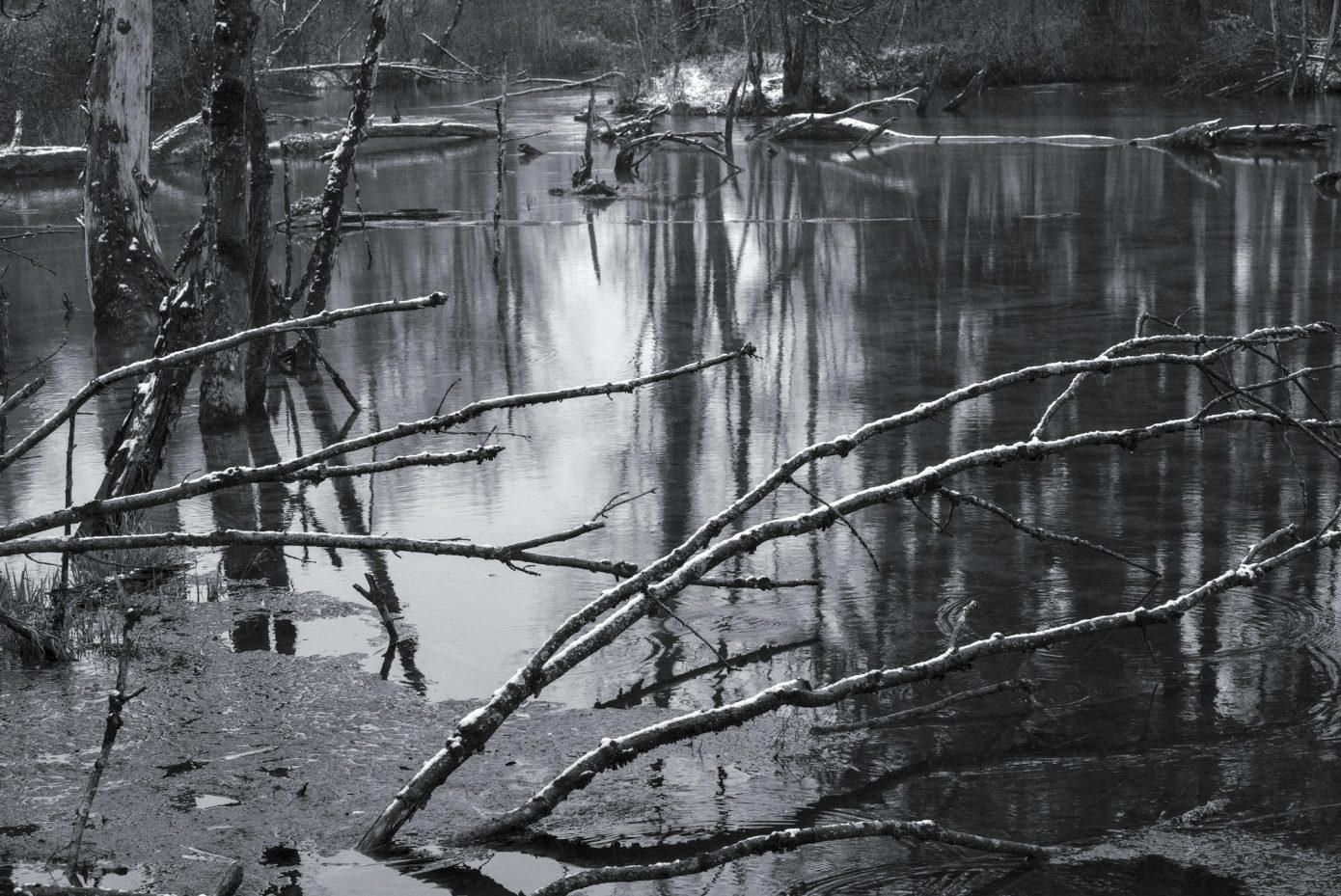 Swamp_white_highlighted.jpg