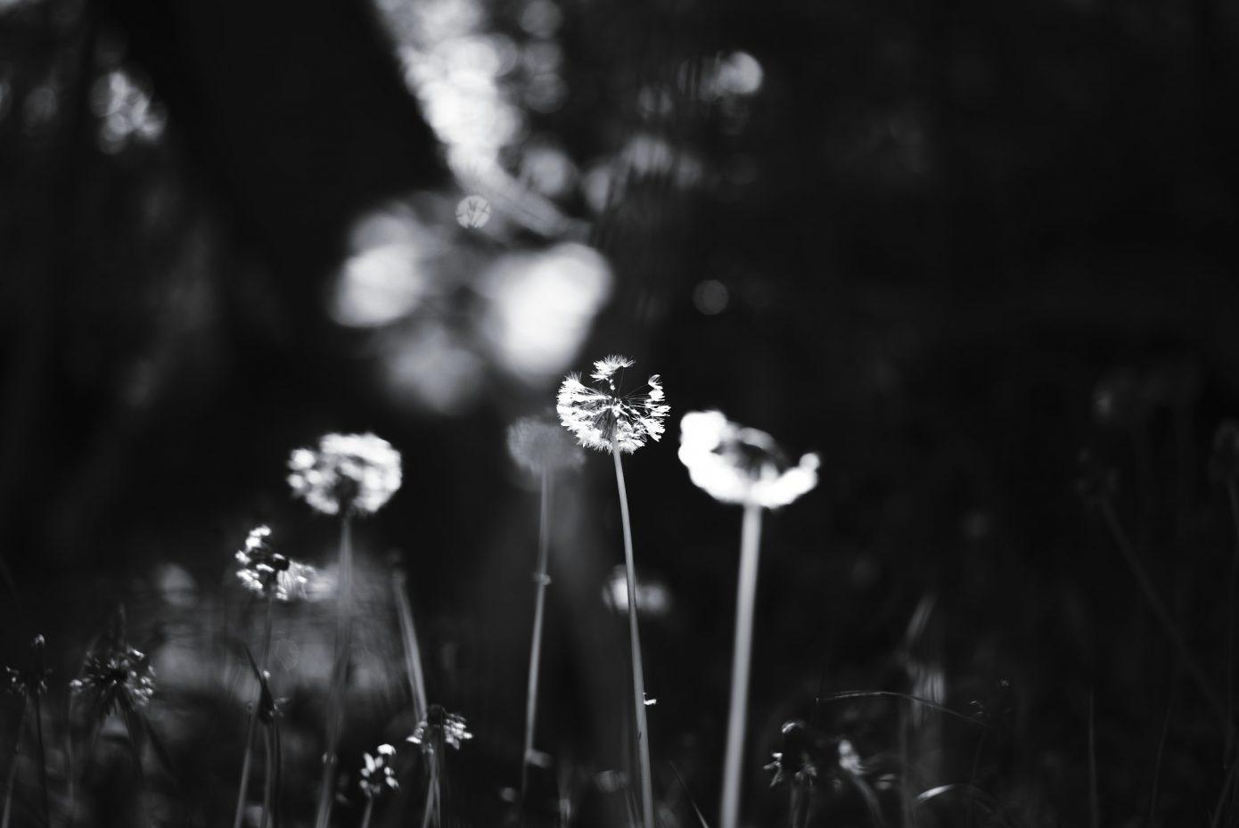 Blinding_Pre-Summer_Light.jpg