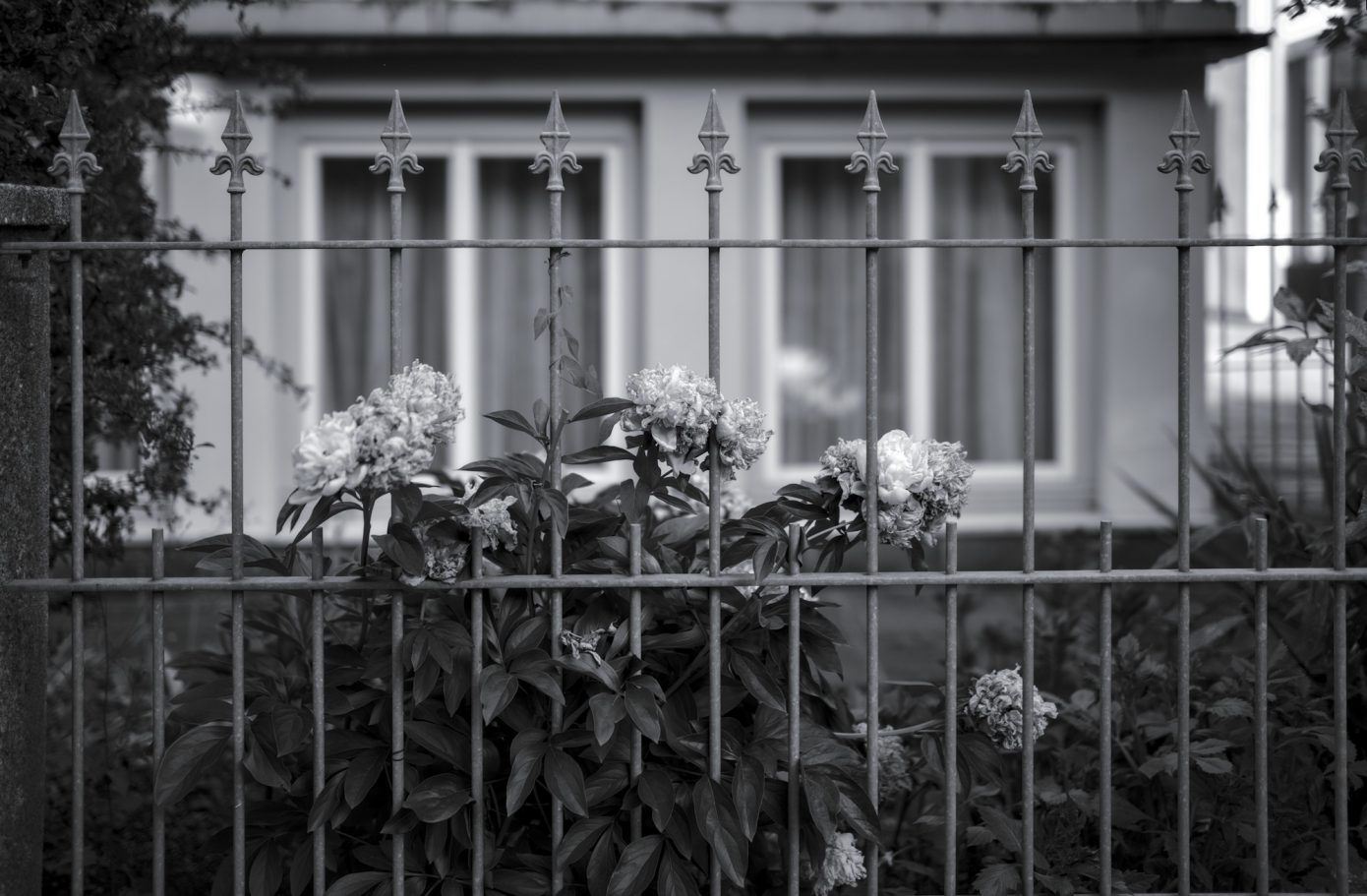 Peonia_and_Fence.jpg
