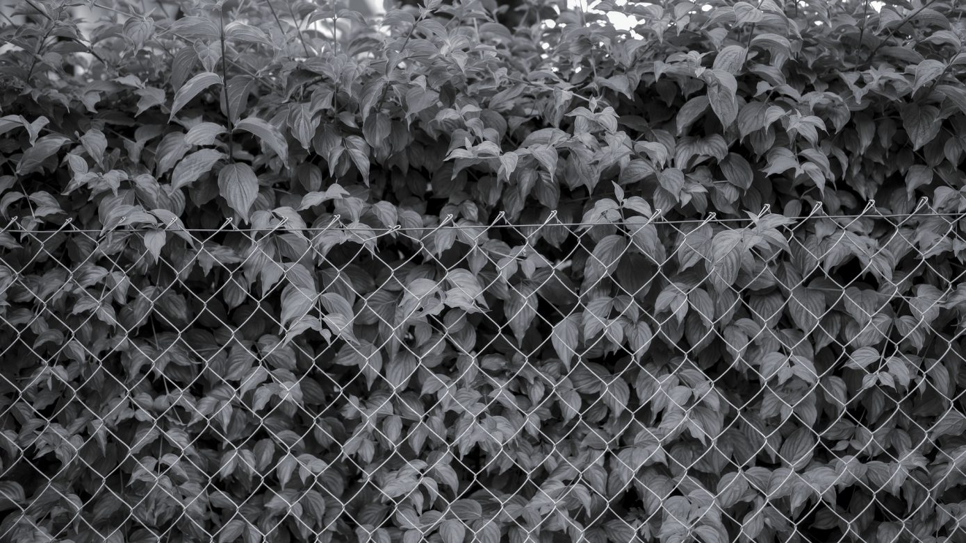 Standard_Fence.jpg