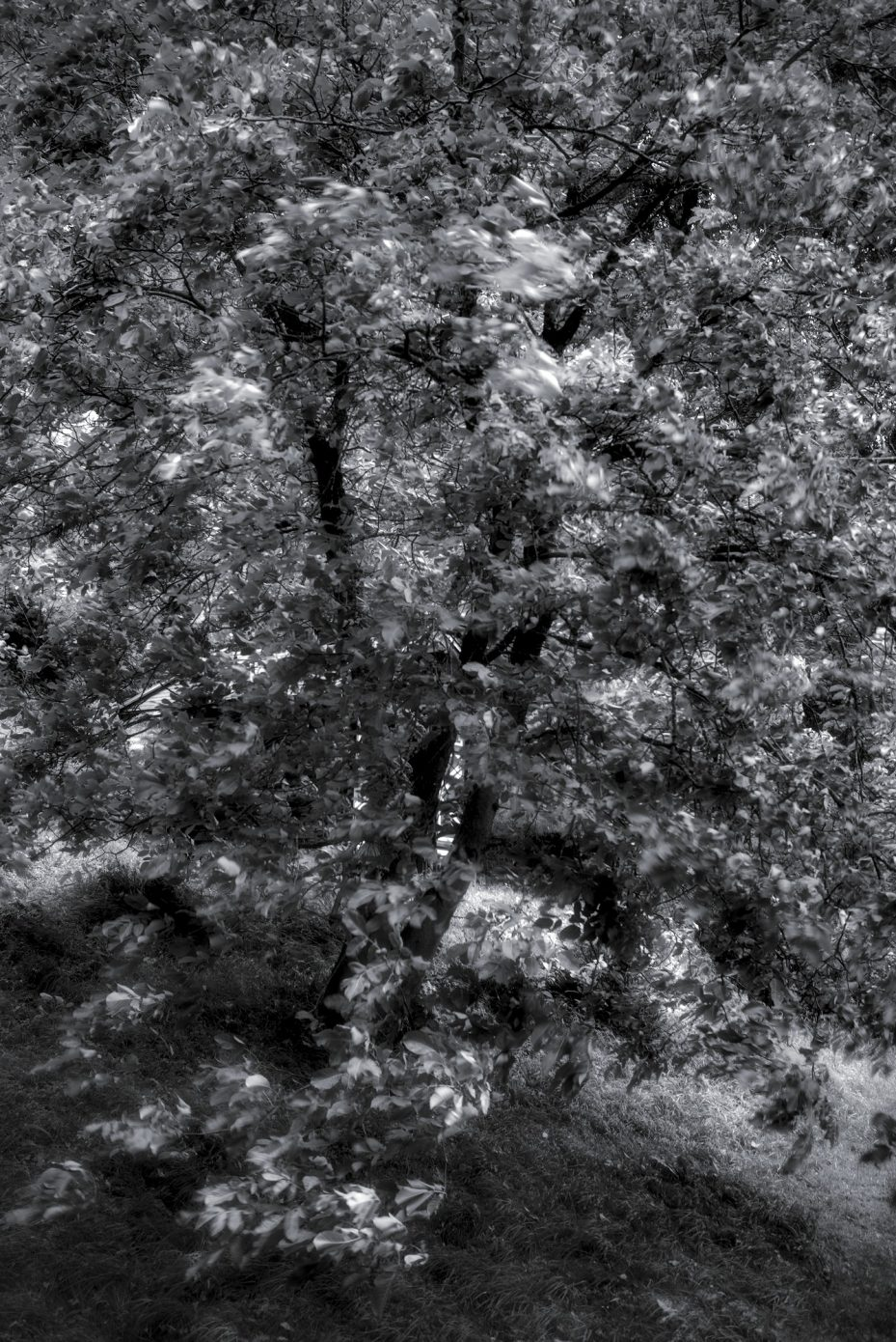 Storm_all_over_the_Chestnut_Tree.jpg