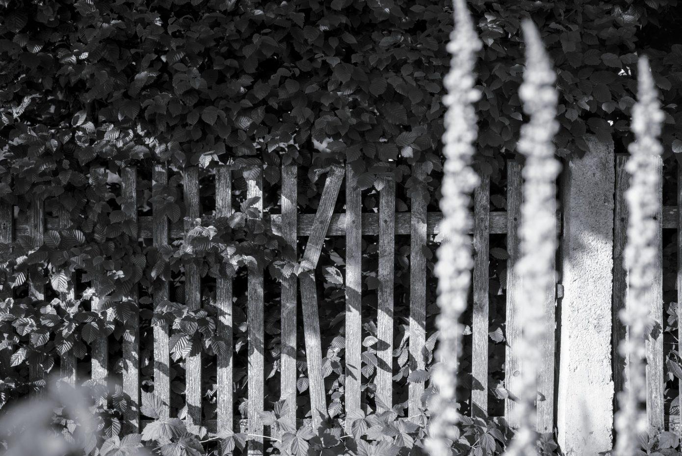 Old_Fence.jpg