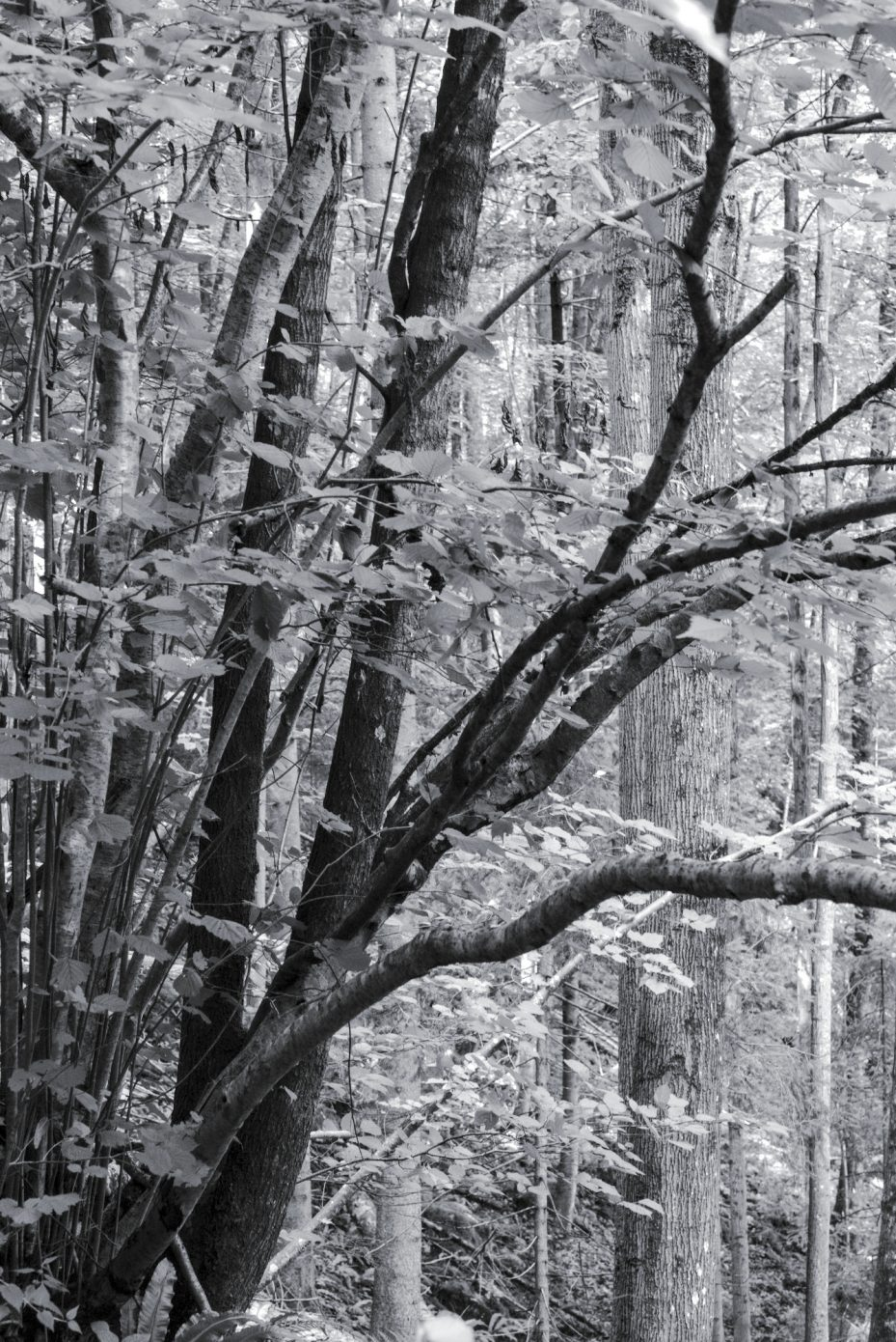 Dark_Trees.jpg