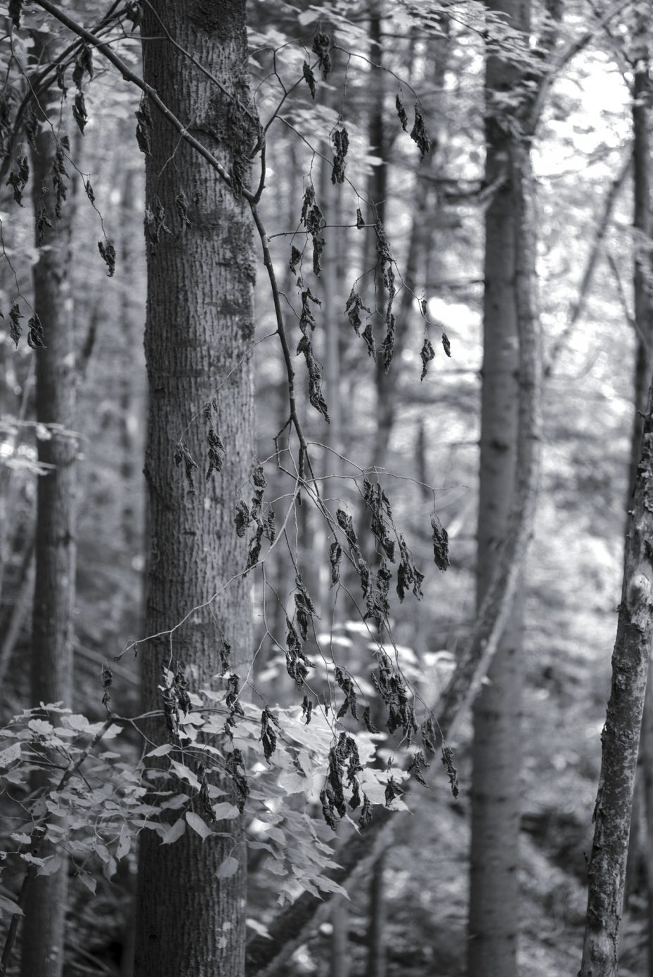 Dry_Leaves_and_a_Curve.jpg
