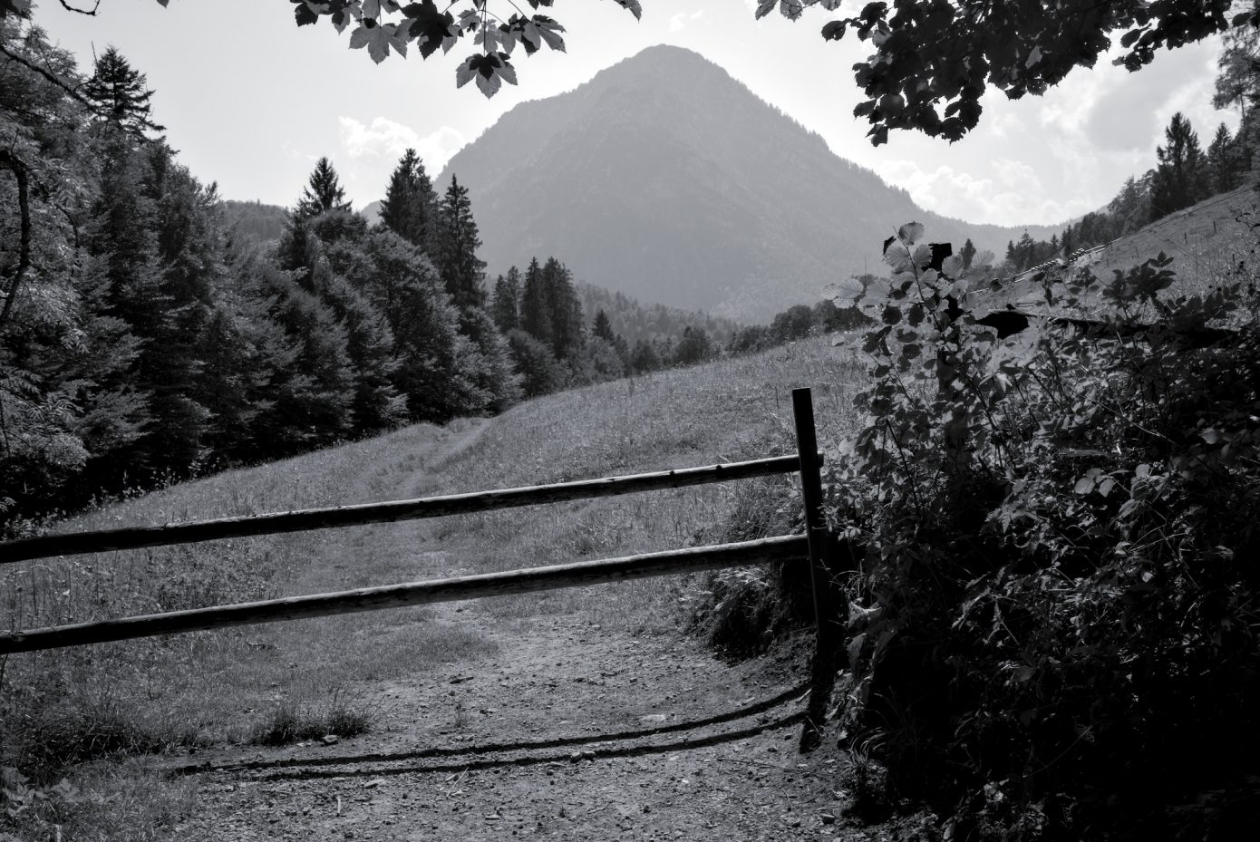 Mountain_Pastures.jpg