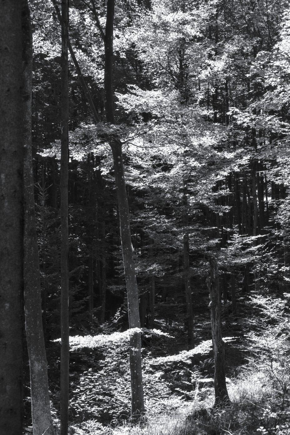 Cascades_of_Light.jpg