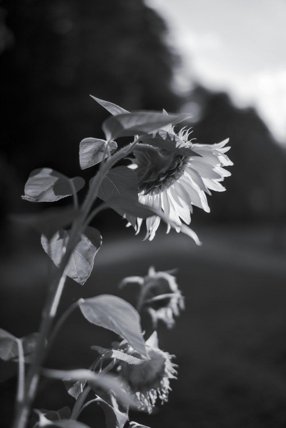 Herbstgru_.jpg