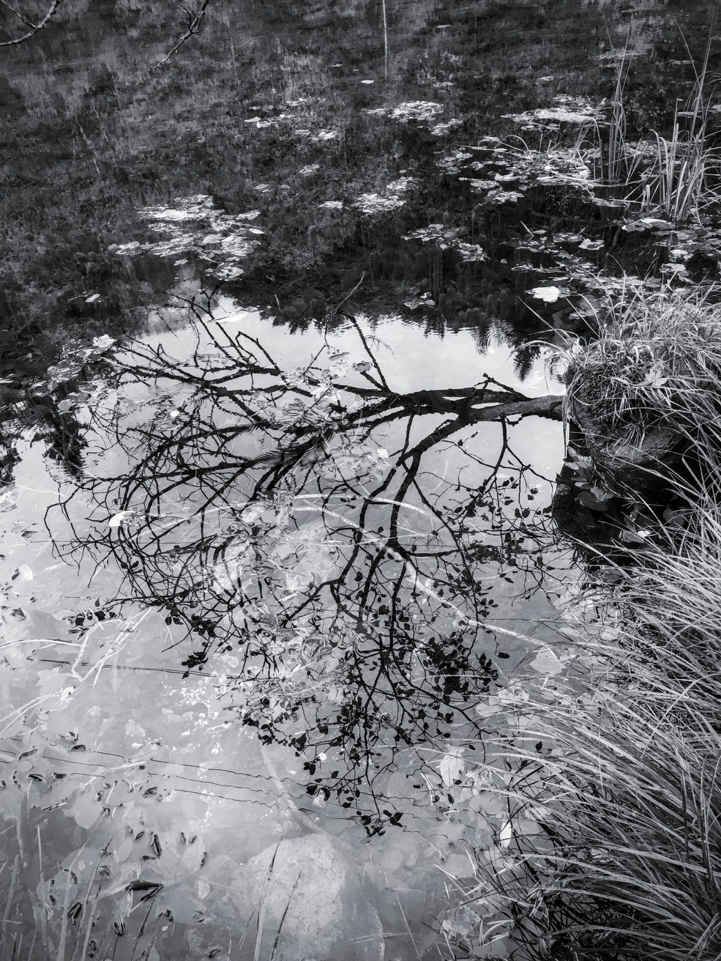 Tree_in_the_Pond.jpg